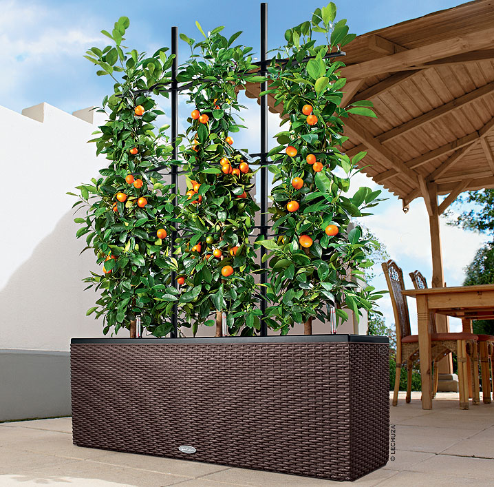 lechuza rankgitter triocottage40 15031 schwarz zubeh r. Black Bedroom Furniture Sets. Home Design Ideas