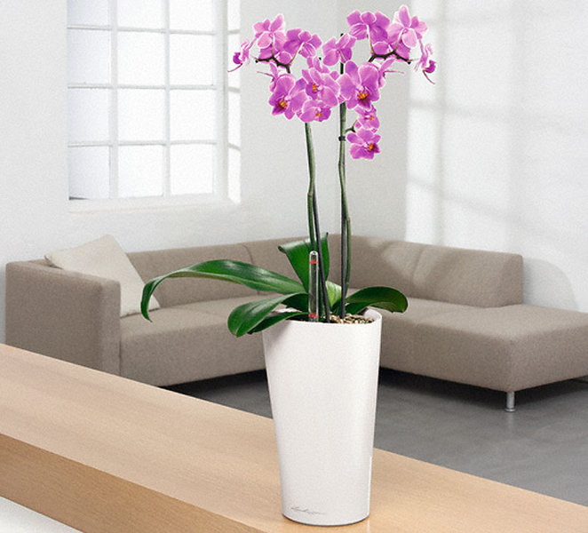 Lechuza Pflanzgefäß DELTA 15 Komplettset 15400 weiß - Art Jardin