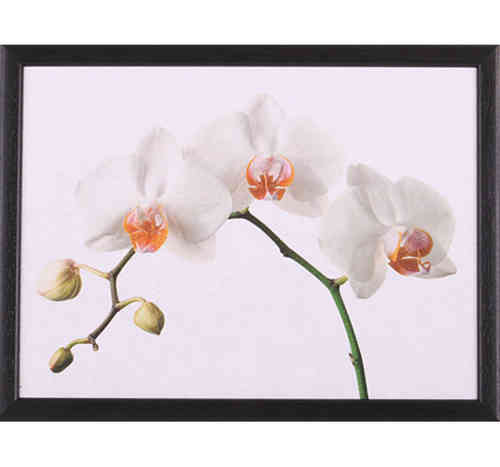 Andrew´s Knietablett Orchid CTOrchid Laptray Tablett