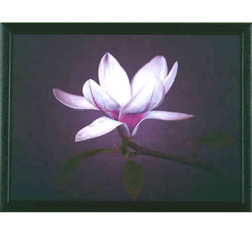 Andrew´s Knietablett Waterlilly CTWL Indoor Laptray